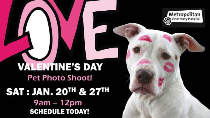 Valentine's Pet Photos at Metropolitan Vet